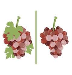 Grape Bunches of grapes vector