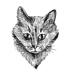 Head of cat vector