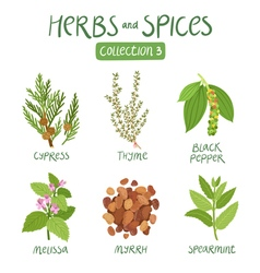 Herbs and spices collection 3 vector image