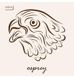 osprey vector image