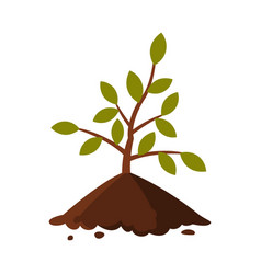 Young tree sapling in ground flat style vector
