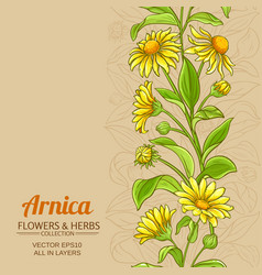 Arnica plant pattern on color background vector