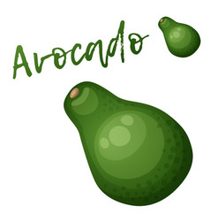 avocado fruit cartoon icon isolated on vector image