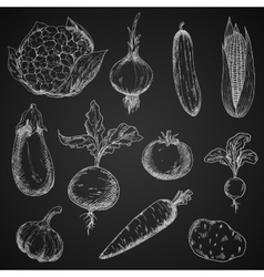 Fresh organic vegetables sketches set vector image