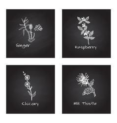 Handdrawn Medicinal Herbs - Health and Nature Set vector image
