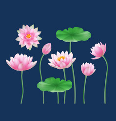 lotus realistic buds nature colored flowers yoga vector image