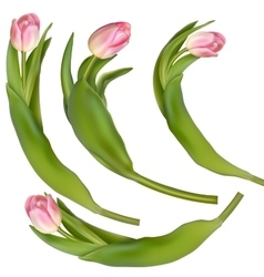 Set of 4 tulips on a white background EPS 10 vector