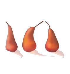 set of ripe red pears vector image