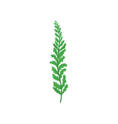 small twig of fern tropical plant with bright vector image