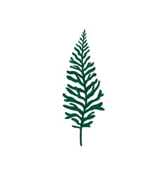 flat icon of leather-leaf fern green plant vector image