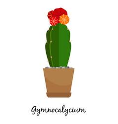 gymnocalycium cactus in pot vector image