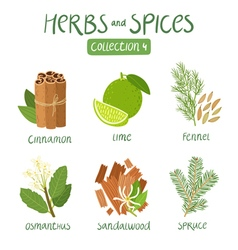Herbs and spices collection 4 vector image