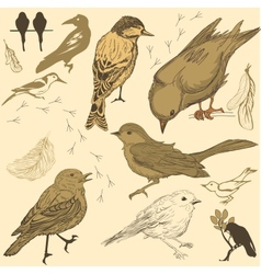 Set of handdrawn birds vector