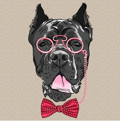 hipster dog Cane Corso breed vector image vector image