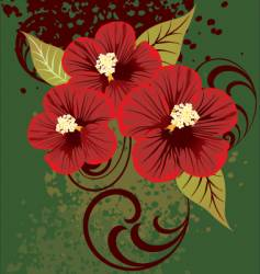 01 hibiscus vector image vector image