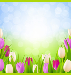 nature card with tulips vector image vector image