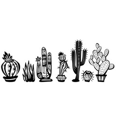 Cactuses vector