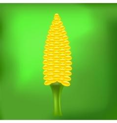 Cob Corn vector