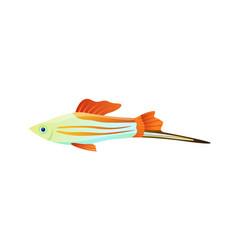 Colorful swordtail fish color vector