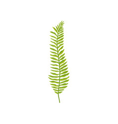 Fern branch with bright green leaves wild forest vector
