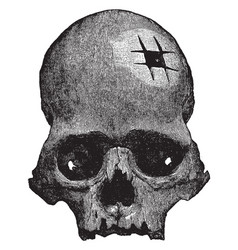 Inca skull vintage vector