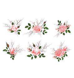 bouquet of pink roses can be used as greeting vector image