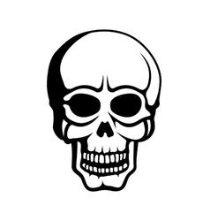 Human Skull on White Background vector image