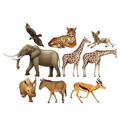 Various kind of wild animals vector