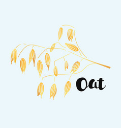 cereals hand-drawn oat vector image