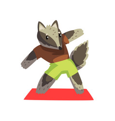 Cute raccoon doing sports exercise wearing sports vector