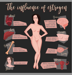 Estrogen influence infographic vector