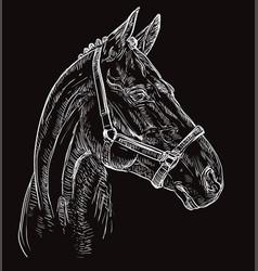 Horse portrait black 27 vector