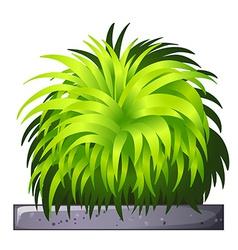 A decorative plant vector