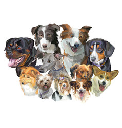 different dog breeds vector image