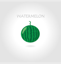 Green watermelon vector