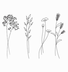 hand drawn of wildflowers set isolated on white vector image