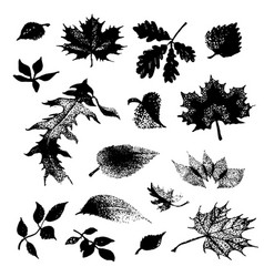 hand drawn sketch of leaves on vector image