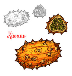 Kiwano melon sketch exotic tropcial fruit vector