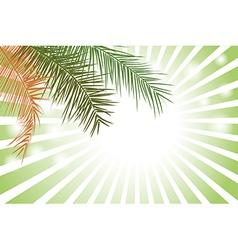 Palm Leaf or Coconut leaf Background vector image