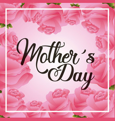 pink roses floral decoration greeting card mothers vector image