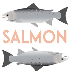 Salmon isolated on white vector image