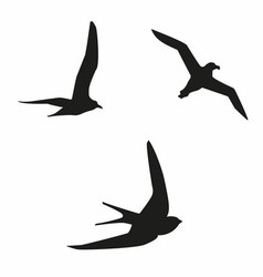 Sea birds vector