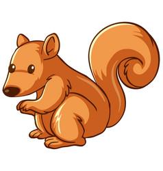 squirrel animal cartoon on white background vector image