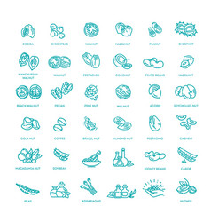 Web icons collection - nuts beans and seed vector