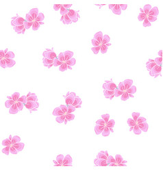 sakura pattern on white background vector image
