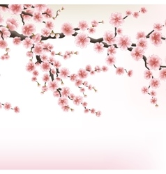 Blossom cherry tree branches EPS 10 vector image