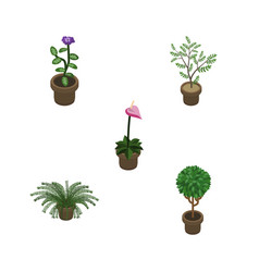 Isometric houseplant set of flower grower plant vector