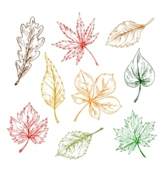 Leaves sketches set Hand drawn vector
