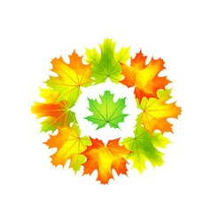 autumn round vector image vector image