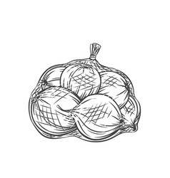 Onions packed in net bag vector